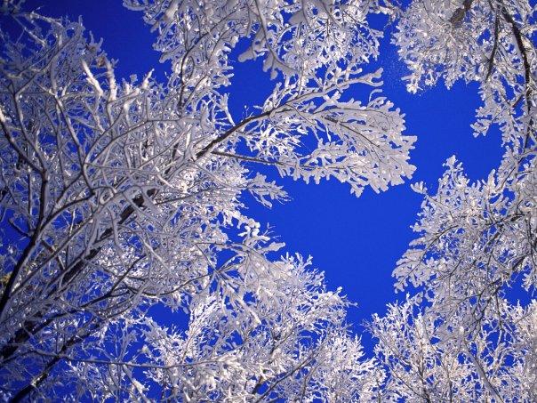 Зима снег ветка дерево